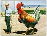 农场管理我帮你 无需再沉迷!